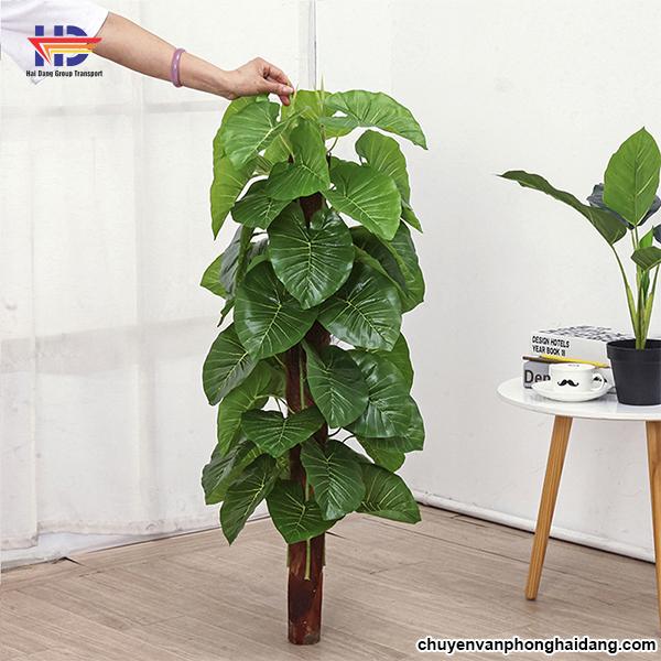 những loại cây trồng trong nhà
